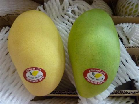Green and yellow mangoes in South Korea