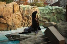 A seal at Zootopia