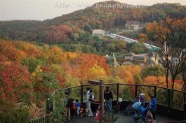 Autumn at Everland