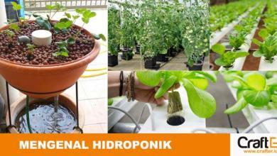 sistem tanaman hidroponik