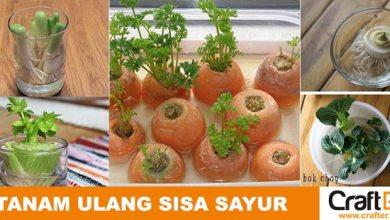 Photo of Sisa Sayuran yang Bisa Ditanam Ulang
