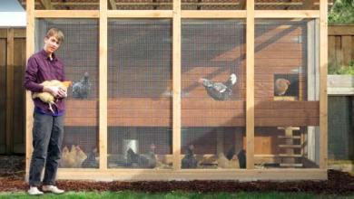 Photo of Tinggal di Kota dan Ingin Beternak Ayam Petelur Skala Kecil Dibelakang Rumah? Bisa Kok!