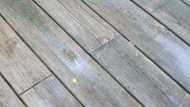 Photo of Kerusakan Kayu, Faktor Kimia Penyebab Rusaknya Kayu