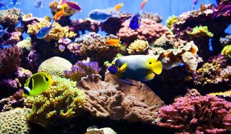 akuarium air asin
