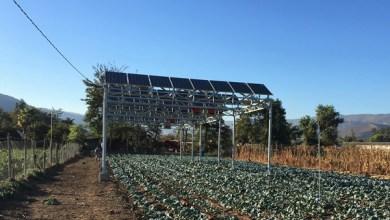 Manfaat Panel Surya untuk Pertanian