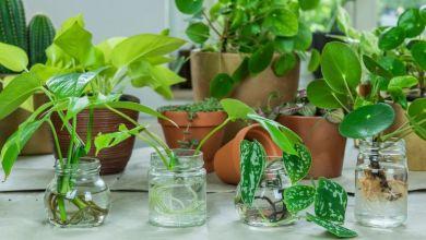 harga tanaman hias