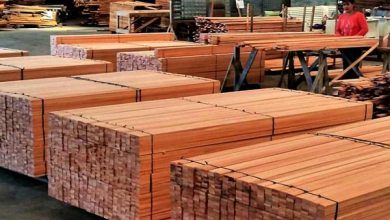 harga eksport kayu mahoni