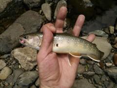岩魚27cm