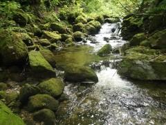 檜枝岐の源流