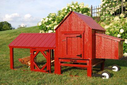 Chicken coop should be built to ward off predators