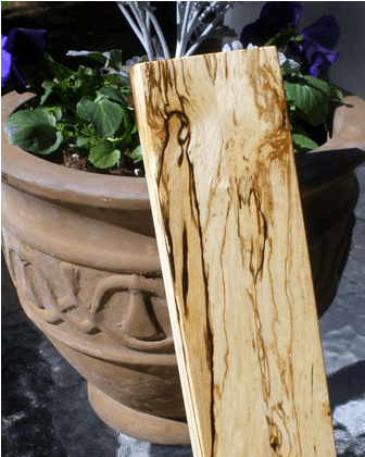 spalted tanoak from Oregon close up image via Kit Tosello