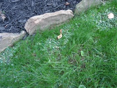 grass growing near stone border