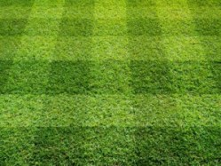 green grass closeup in checker pattern