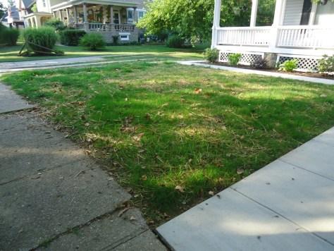 Grass Growth Front Yard @ 16 Days