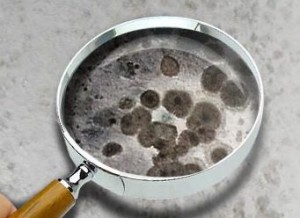 Mold Prevention Tips :: Mold Under a Magnifying Glass