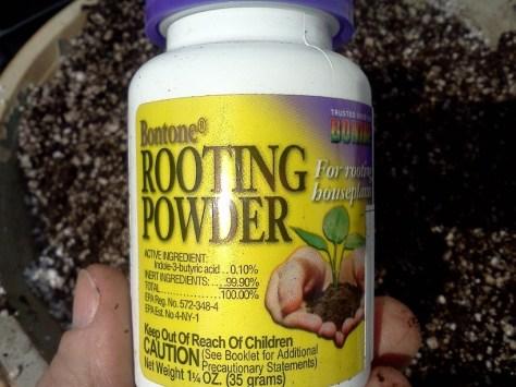 rooting hormone via Donna Dixson