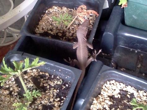 small lizard plant inspector via Donna Dixson