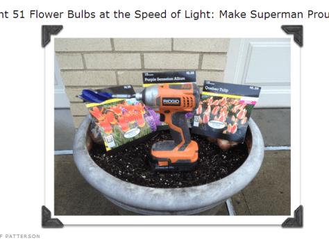 Plant 51 Flower Bulbs