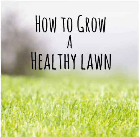 Lawn Care :: How to Grow a Healthy Lawn