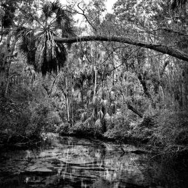 Upper Crawford Creek, Chassahowitzka NWR, FL