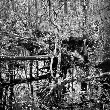 Slough, Brooker Creek, FL