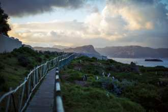"""African Penguins are seen alongside Burgher's Walk adjacent to Bolder Beach after a tourist left a gate open in Cape Town, South Africa on Saturday, August 31, 2013. The walkway is part of a restoration and conservation project designed to keep the penguins safe from predation and wandering into the roadways. The African Penguin, also known as the """"Jackass"""" Penguin for its braying vocalizations, is a critically endangered animal hurdling toward extinction. Their population declined 95 percent from the turn of the 20th century and a recent crash reduced their numbers from around 60,000 breeding pairs in 2000 to 25,000 pairs and dropping today. They face traditional threats from other land and sea animals, but human habitat encroachment and severe overfishing has led to unsustainable conditions for the species. Despite the efforts of many organizations that exist to conserve their existence and being beloved mascots and a popular tourist draw in Southern Africa where they are found, they face extinction much sooner than later."""