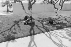 Incidents by Henry Wessel
