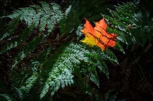 Adirondacks Fall