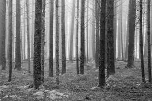 Light at the Forest Edge ©Jeffrey Stoner