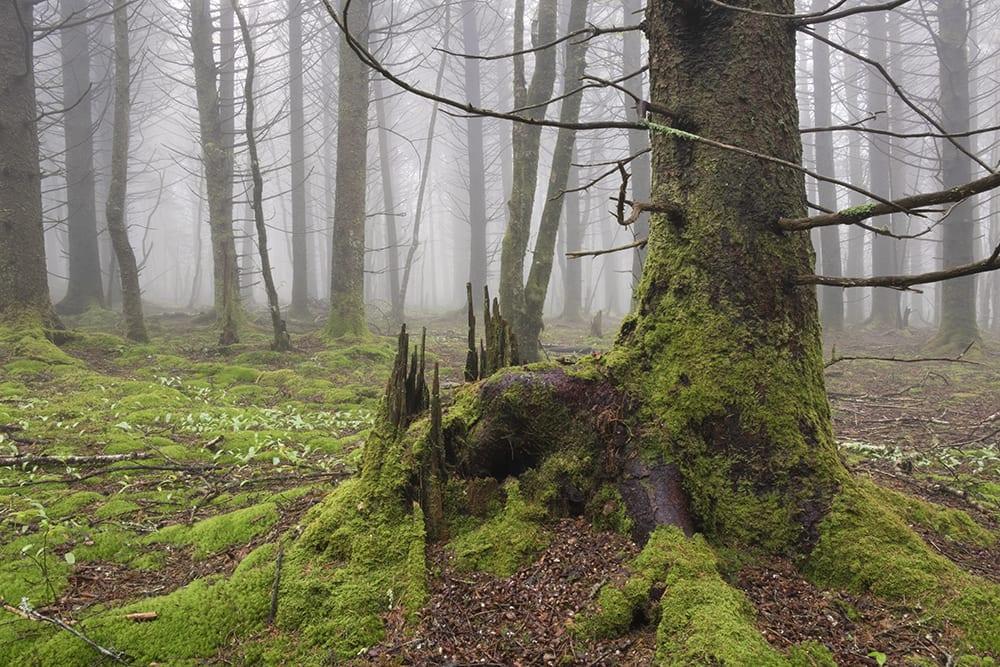 Unaka Mountain, A Land of Enchantment | Jeffrey Stoner