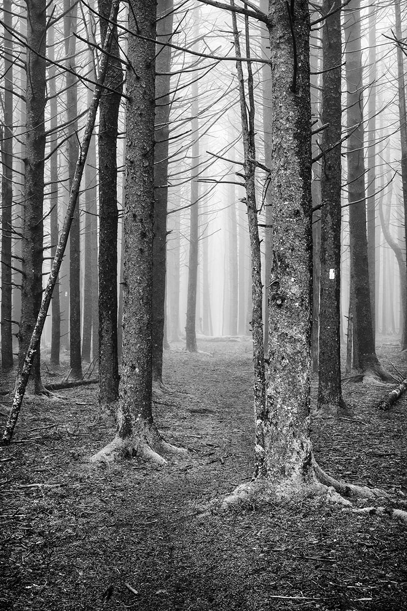 The Forest Entry ©Jeffrey Stoner