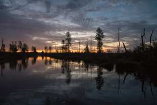 Okefenokee Swamp GA 2016 ©Judy Lampert
