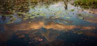 Swamp Cloud ©Wif Harmer
