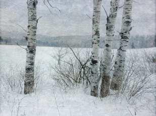 Winter Birch ©KarenKlinedinst