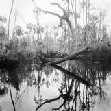 Wasted Forest, Crawford Creek