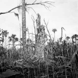 Stump and Dead Trees, Upper Crawford Creek