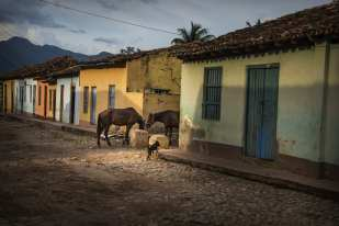 Horses Drinking, Trinidad ©Chip Cooper