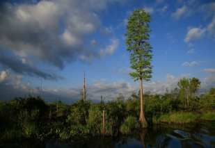 Okefenokee 2 ©Molly Faircloth