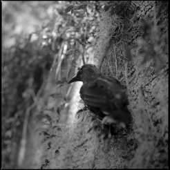 Black Bird ©Evy Huppert