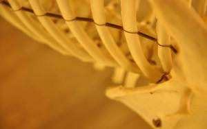 osteopaat-bbz