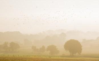 Een mistige zonsopkomst in de Limburgse heuvels.