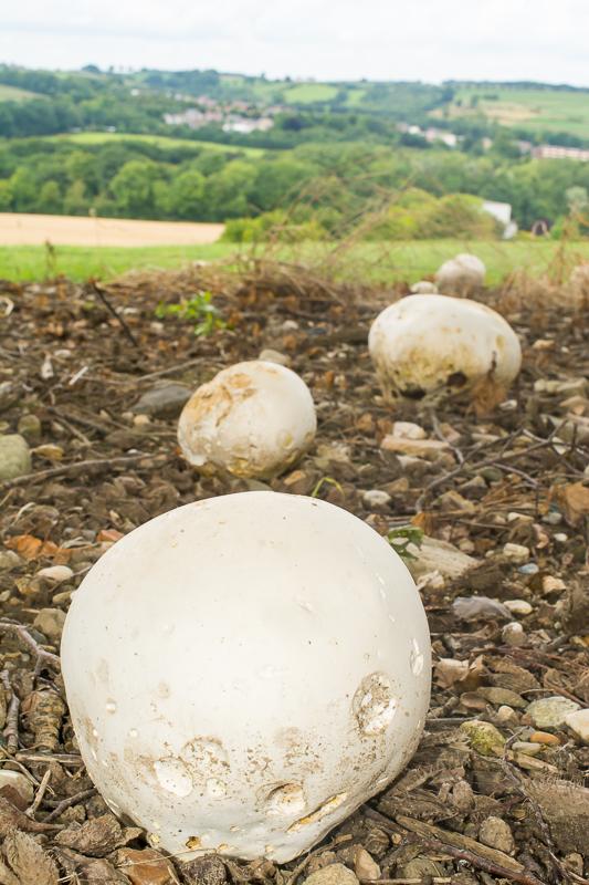 Door de paddenstoelen te fotograferen met een groothoeklend plaats je ze in het landschap.