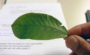 Waarom is de onderkant van een blad lichter dan de bovenkant?