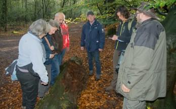 Onze mentor legt uit wat bruinrot dot met een boom.