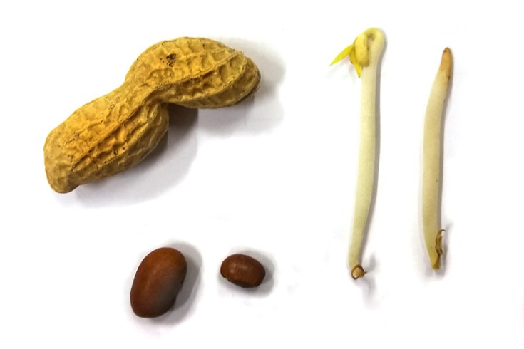 Allemaal verschillende zaden, maar met meer overeenkomsten dan je op het eerste oog zou denken.