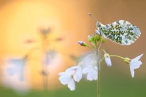 Read more about the article Het belang van goede natuurfotografie