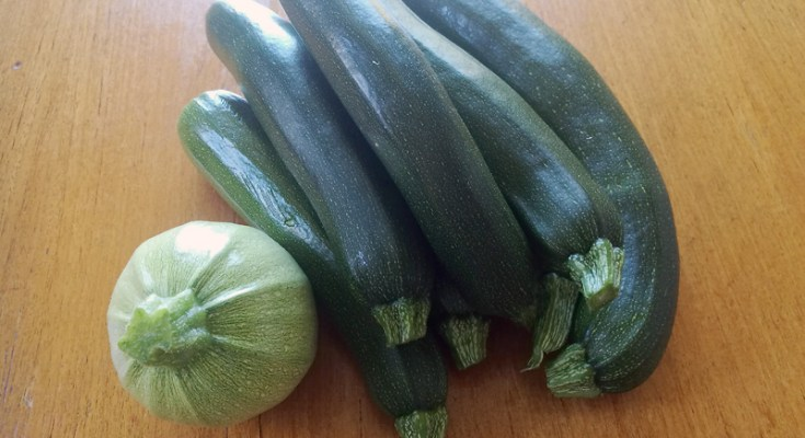 Altijd courgettes in overvloed!