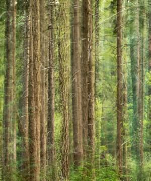Vakantiefotografie in het Speulderbos