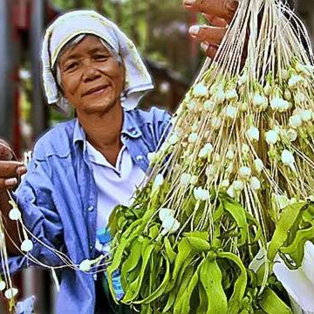 The Sweet Little Sampaguita, the Filipinos, and the Malolos 'Planta' 7
