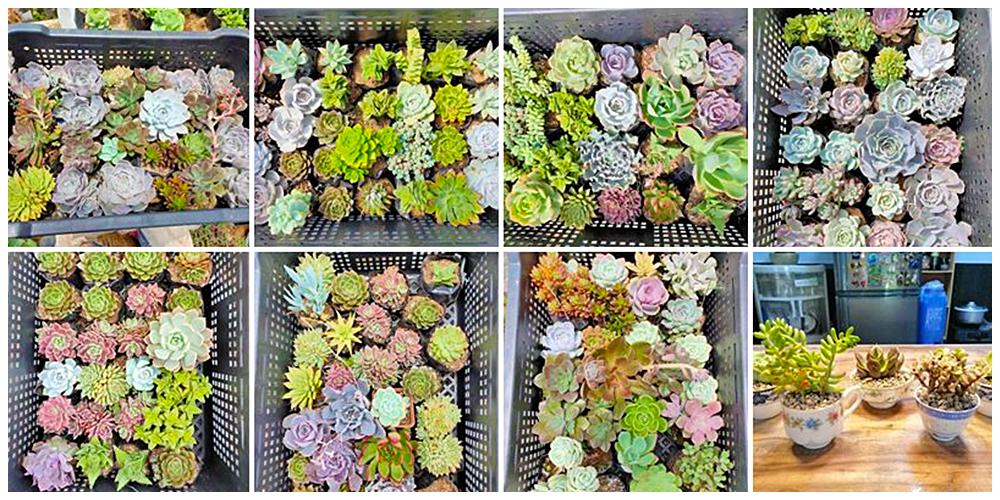 The Noah's Garden - Cactus, Succulents and Indoor Plants in Bulacan